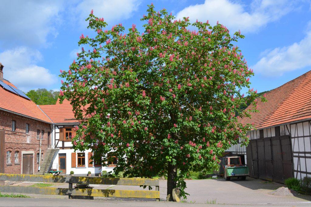 Baum in Benkhausen