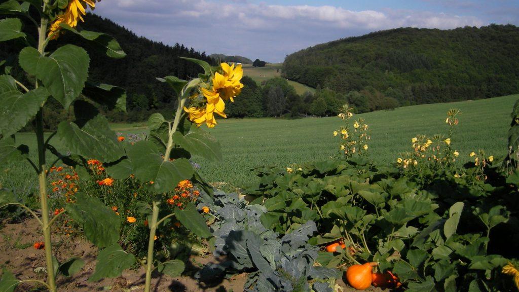 Feldgarten Richtung Westerfeld